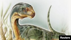 Ilustrasi Chilesaurus diegosuarezi oleh pihak University of Birmingham di Birmingham, Alabama (27/4).