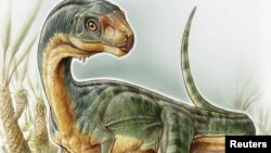 Nombrado Chilesaurus diegosuarezi, fue catalogado como miembro de los terópodos, grupo que incluye Tyrannosaurus rex.