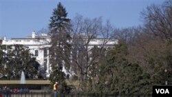 El árbol de Navidad se derrumbó debido a los fuertes vientos que azotaron a Washington.