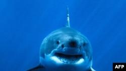 Ủy ban Quốc tế về Bảo tồn Cá ngừ Đại Tây Dương ra lệnh cấm săn bắt 7 loài cá mập có nguy cơ bị tuyệt chủng trên Đại Tây Dương.