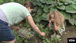 Shannon Kline dan puterinya Alice memetik sayuran dari kebun mereka di Baltimore (Agustus 2012). Semakin banyak keluarga muda AS berkebun sayur untuk kebutuhan sendiri.