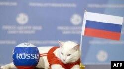 Paka pembeni ya bendera ya Russia Juni 13, 2018 St Peterburg baada ya kutabiri mshindi wa mechi ya kwanza kati ya Russia na Saudi Arabia, Machi 12, 2018.