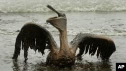 漏油事故曾造成生態災難。
