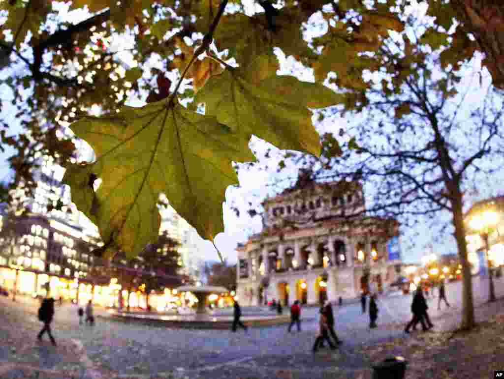 Leaves hang from a tree at the Opera square in Frankfurt, Germany.