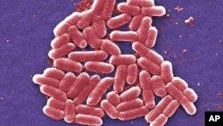 اشریشیا کُلی (E. coli) - یک نوع باکتری که اغلب در روده حیوانات زندگی می کند و برخی از سویه های آن موجب مسمویت و اسهال در انسان می شود.