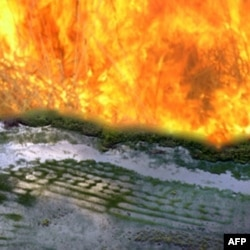 Raised fields in French Guyana that remain much as ancient Amazonian farmers left them. The simulated flames represent the European slash-and-burn agriculture that came afterward.