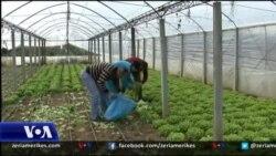 Vështirësitë e fermerëve shqiptarë