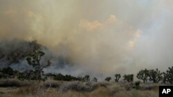 Photo provided by the Joshua Tree National Park shows a 300-acre fire in Joshua Tree National Park, east of Palm Springs on August 12, 2012.