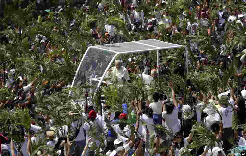 Roman Catholics wave palm leaves as Pope Francis arrives to celebrate Mass at the Monument Mary Queen of Peace in Port Louis, Mauritius.