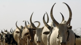 Dozens are killed in what officials say was a reprisal attack for the abduction of eight women and the theft of scores of head of cattle in South Sudan.
