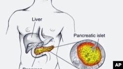 Vị trí của tụy tạng (pancreas)