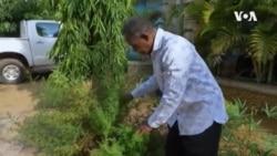 Nigeria Herbal Medicine ...