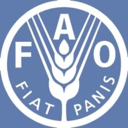 FAO defende investimentos na agricultura angolana - 1:38