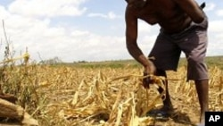 Huíla : Governo toma medidas para combater a seca - 2:06