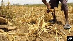 Quénia: Fome e seca no Norte enquanto comida apodrece no Centro