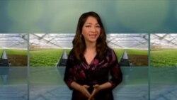 美国万花筒:屋顶温室为居民常年提供鲜嫩生菜