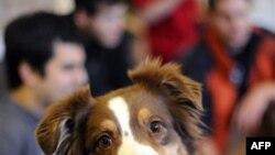 Пятилетная Салли - дипломированный терапевт - со студентами Тафтского университета 14 декабря 2010г.
