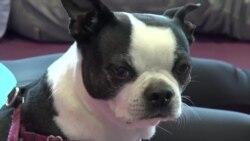 全家练犬伽:人狗双修的开心瑜伽课