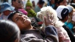 韩国总统拟禁狗肉 动保人士吁中国3年内跟进