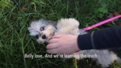Life of a Dog Walker