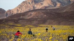 Tourists take picture of wildflowers near Badwater Basin in Death Valley, California (February 24, 2016)