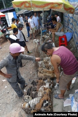 FILE - Dogs being dealt at the market in Yulin, China.
