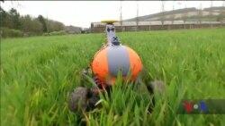 Як автоматизація може зменшити негативний вплив промислового сільського господарства на екологію. Відео