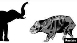 Una comparación del Lisowicia bojani con un elefante reciente se muestra en este folleto de ilustración, el 21 de noviembre de 2018.