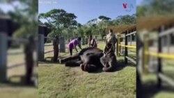 بھارت میں ہاتھیوں کے کرونا ٹیسٹ