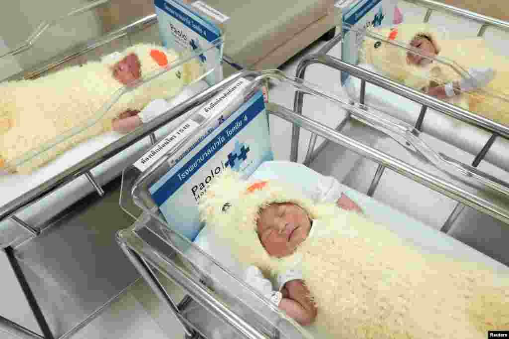 لباسی به شکل مرغ در کودکان نوزاد در بیمارستانی در بانکوک تایلند به مناسبت سال خروس. سال نو چینی فردا تحویل میشود.