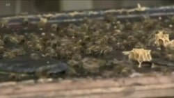با افزایش حرارت زمین حشرات گرسنه تر و بیشتر می شوند