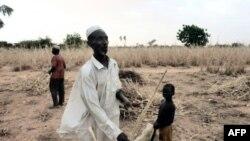 Un Nigérien dans son champ détruit... L'Ouest du Niger pourrait connaître une nouvelle crise alimentaire en 2012. (photo d'octobre 2011)