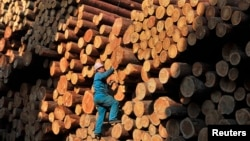 FILE - A worker climbs on piles of logs at a timber storage in Shenyang, Liaoning province, April 15, 2010. China's insatiable demand for lumber is prompting the Solomon Island to cut down trees at an unsustainable speed.