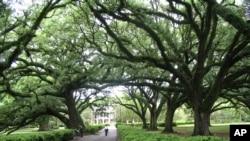 En una ciudad del estado de Maryland ha plantado más de 1.100 árboles.
