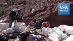 En Argentine, le plus grand dinausore jamais découvert