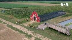 Аби врятувати господарство від банкрутства фермер кардинально змінив напрямок бізнесу. Відео