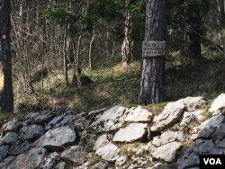 """""""Šta ćeš u gradu, uživaj u mom hladu"""" natpis je tabli okačenoj na stablu na Trebeviću"""