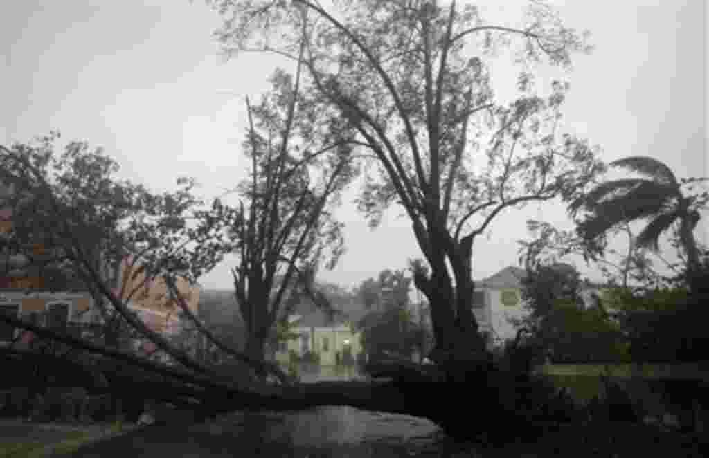 El huracán Irene derribó árboles a su paso por por el este de Nassau, en Isla Nueva Providencia en las Bahamas el 25 de agosto de 2011.