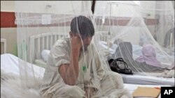 پاکستان میں ڈینگی سے متعلق غلط تصورات ،خوف میں اضافے کا سبب
