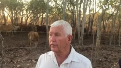 Evicted Farmer Looking for Grazing Land for Over 250 Herd of Cattle
