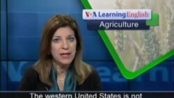 Lack of Rainfall and Snow Hurts Farming in Western US