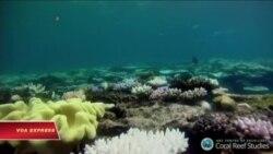 Rạn san hô nổi tiếng thế giới ở Australia lâm nguy