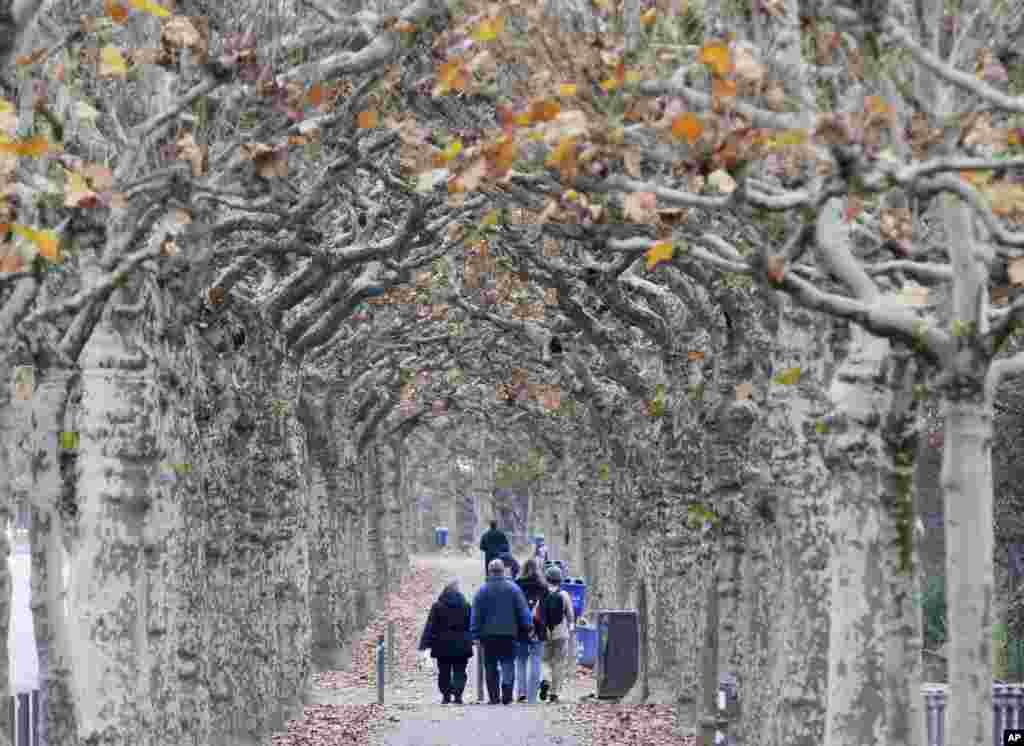 People walk along an alley of plane trees in Frankfurt, Germany.