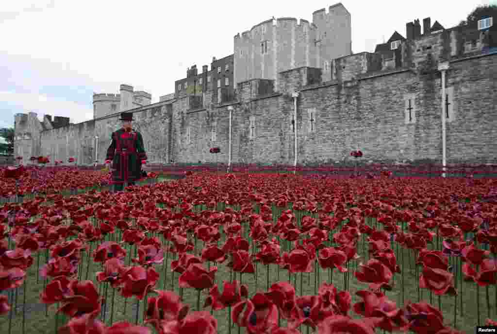 "Yeoman Serjeant Bob Loughlin walks amongst the art installation ""Blood Swept Lands and Seas of Red"" marking the anniversary of the World War I at the Tower of London."