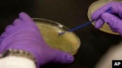科学家为包括礼来在内的制药公司做实验
