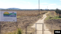 An irrigration system is being repaired on a field of maize in drought-prone Masvingo district, Zimbabwe, May 2019. (C. Mavhunga/VOA)