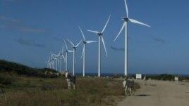 SHBA: A i dëmton shpendët energjia e erës?