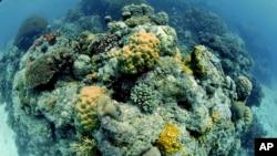 នេះជាទិដ្ឋាភាពនៃតំបន់ថ្មប៉ប្រះទឹក Great Barrier Reef របស់ប្រទេសអូស្ត្រាលី។