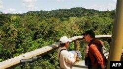 Արևադարձային անտառներում լիանաները մրցակցում են ծառերի հետ` արևի լույսի և սնուցող նյութերի համար