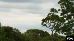 Brasil registra altos niveles de emisiones debido a la tala de la selva amazónica.